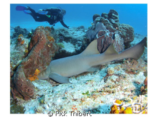 hide and seek with shark by Rick Thibert 